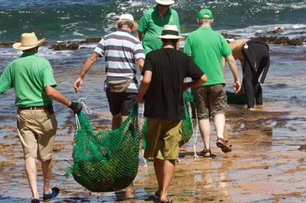 180402_seaweed2