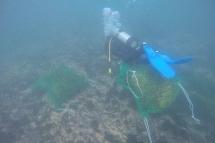 180402_seaweed3