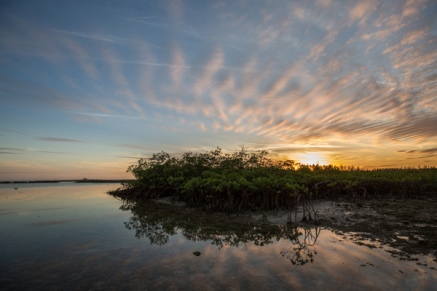 Mangroves have adapted to live in water where land meets sea.