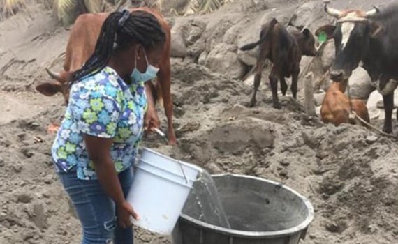 Feed animals on Saint Vincent
